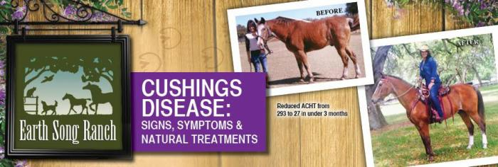 Equine Cushing's Disease - Signs, Symptoms & Natural Treatments