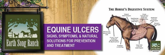 Ulcers in Horses - Natural Remedies,Treatments, Signs