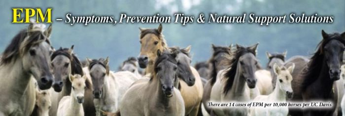 Horse Health Q&A: EPM - Symptoms, Prevention Tips & Natural Support Solutions
