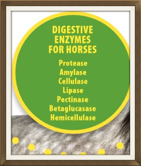Digestive enzymes for Horses - Article by Earth Song Ranch