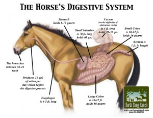Natural Wormer for Horses – A Natural Parasite Control Protocol
